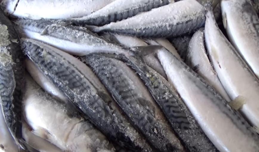 рыба оптом в Екатеринбурге